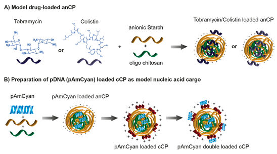 Starch-Chitosan Polyplexes as a versatile carrier system for anti-infectives