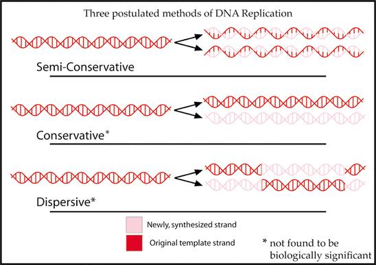 Abb. 1: Übersicht über die drei theoretisch möglichen Replikationsmechanismen der DNA (Quelle: Wikipedia)