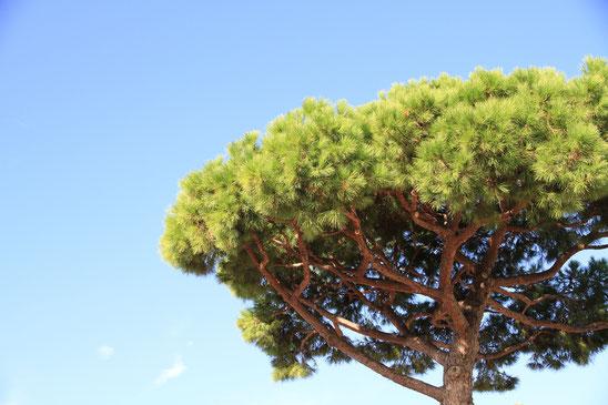 Bach-Blüte Pine, Schuld, Organsprache