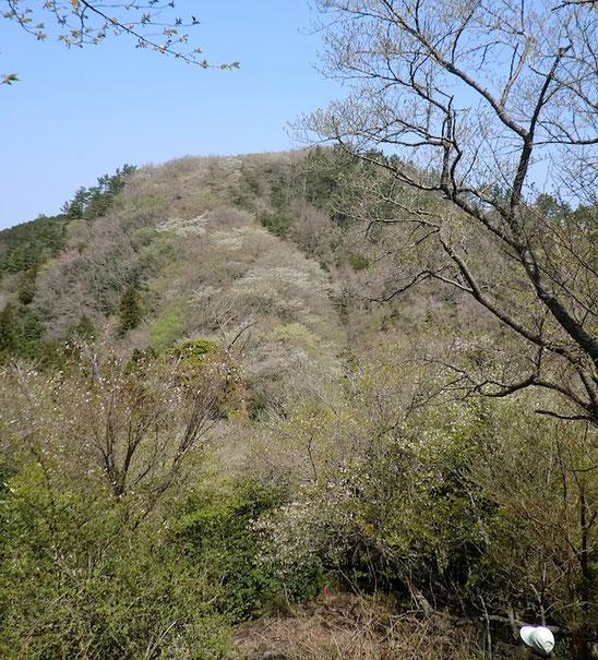 桜の尾根・・・松川湖分岐〜古城山