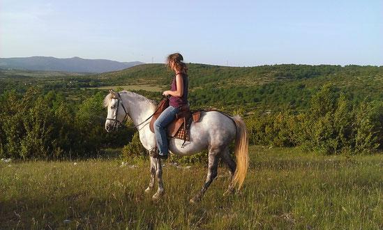 Camargue : préparation du cheval de loisirs