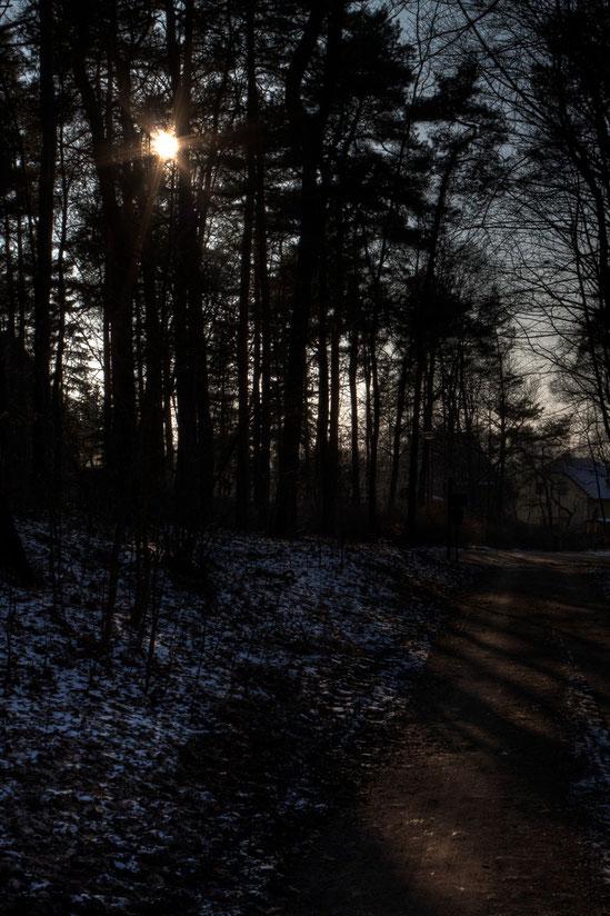 HDR im Wald