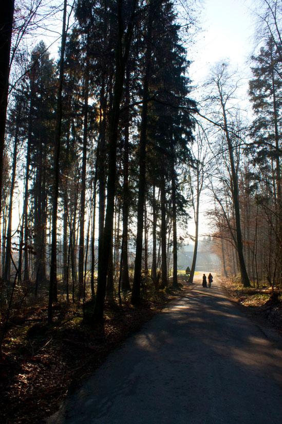 Strengelbacher Wald