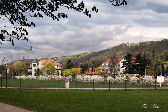 Pillnitz mit Fernsehturm