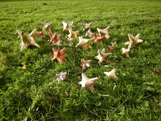 Champ d'étoiles/stars field