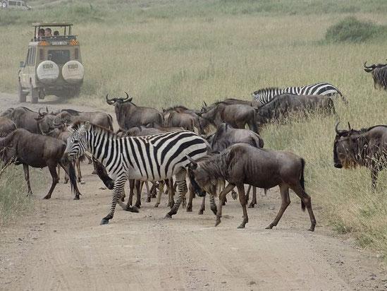 Serengeti Nationalpark, Tansania Safari