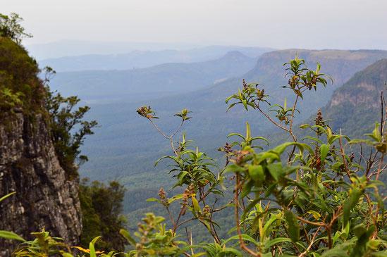 God's Window Südafrika Reise