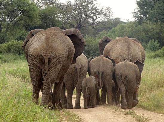 Tarangire Nationalpark, Tansania Safari