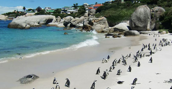 Pinguine Südafrika, Gruppenreisen in Afrika