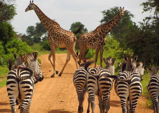 Selous Game Reserve, Tansania Reise