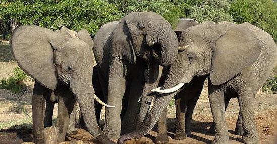 Privatreisen in Afrika, private Safaris