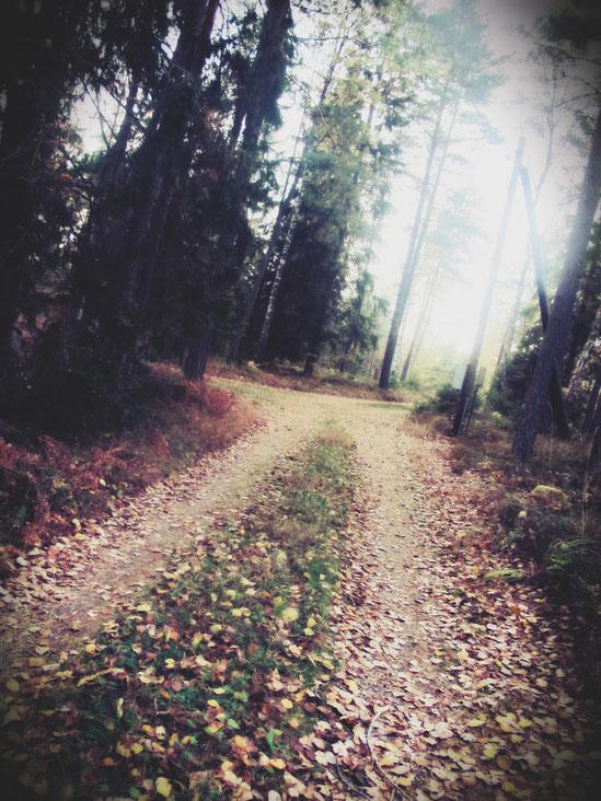 chemin suède feuilles automne route bigousteppes