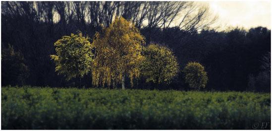 Die Zeit des Herbstes
