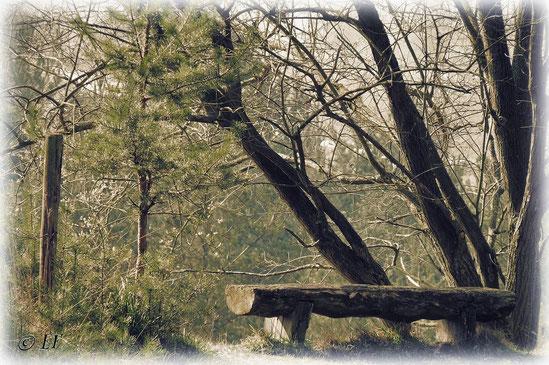 Eine Pause im Wald