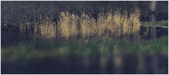 Winterflair am Teich