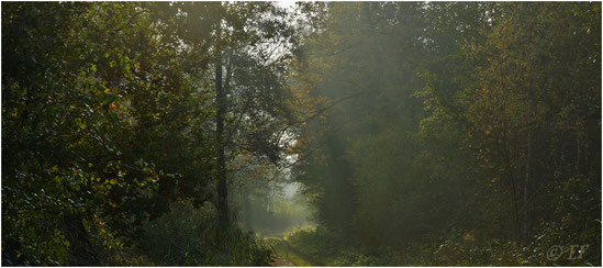 Herbstliches Licht