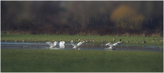 Zugvögel im NSG Hohbruch
