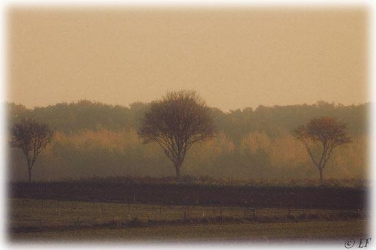 Wie gemalt: Ein Wintermorgen im Selfkant