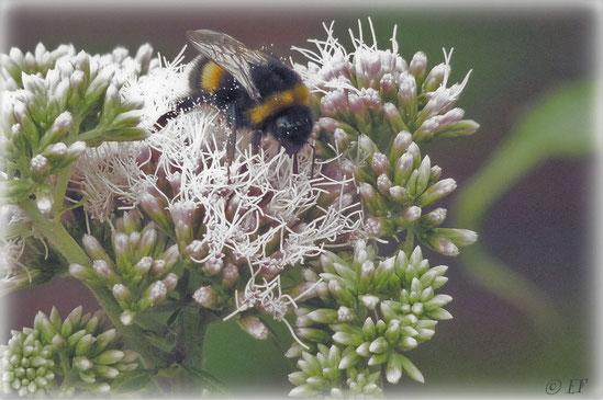 Das Pollenbad