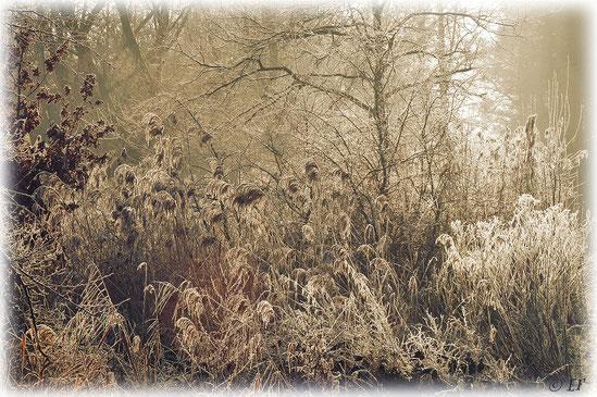 Vor Kälte erstarrt