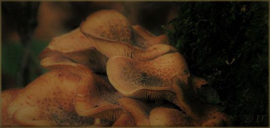Baumpilze im Dunkel des Waldes