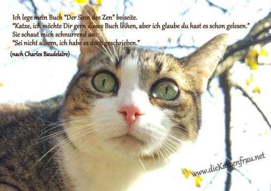 Catsitting Saarland - die Katzenfrau
