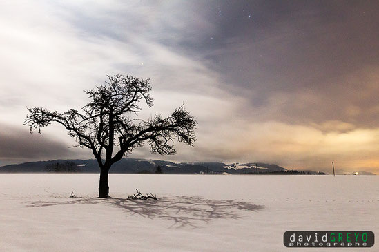 David Greyo  Photographe