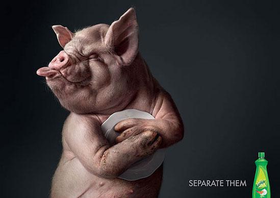 животные в рекламе