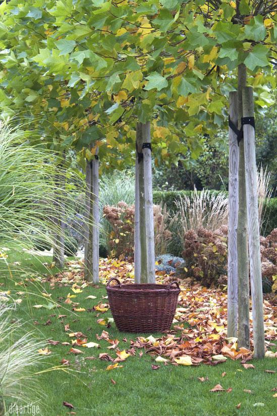 dieartigeBLOG - Kiepe + Herbstlaub = hygge
