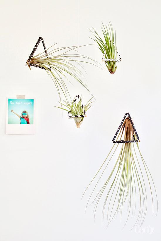 dieartigeBLOG - DIY / Tillandsien schweben in Dreiecken aus Trinkhalmen