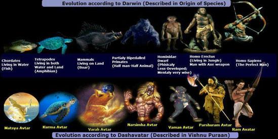Evolution* Spezien synchron mit den entsprechenden  Zeitalter* Avataren
