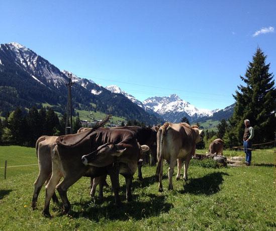Unsere Kühe und deren Nahrung sind die Grundlage für den herausragenden Käse der Hofsennerei Fink