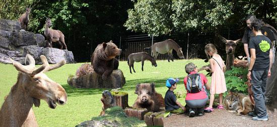 Wildnisboten Wildnispark Zürich - 1