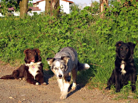 v.l.n.r.: Pepper, Bonny und Loki (April 2011)