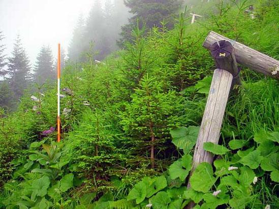 Forstliche Gutachten, Schutzwaldinventuren, Vegetationsaufnahmen