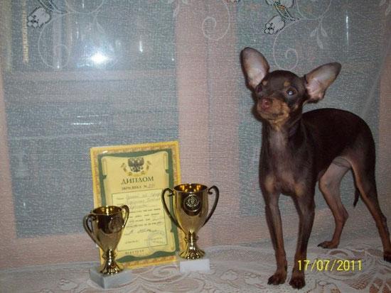 Первые награды