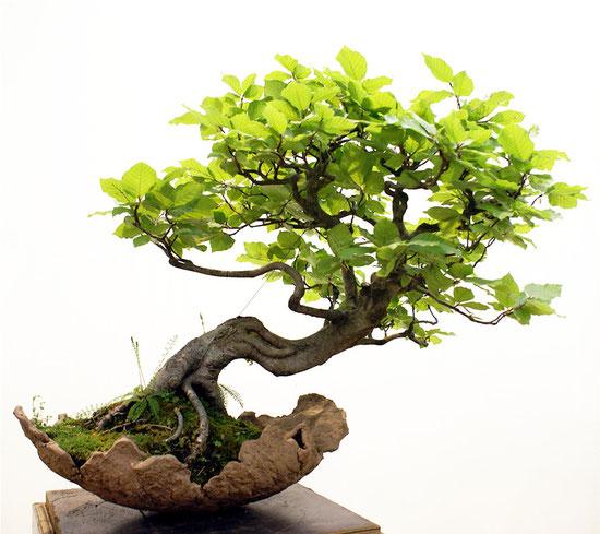 Stehen wie ein Baum - Ruhe sammeln