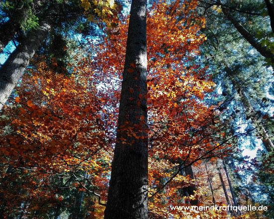 Herbstwald, Kraftquelle