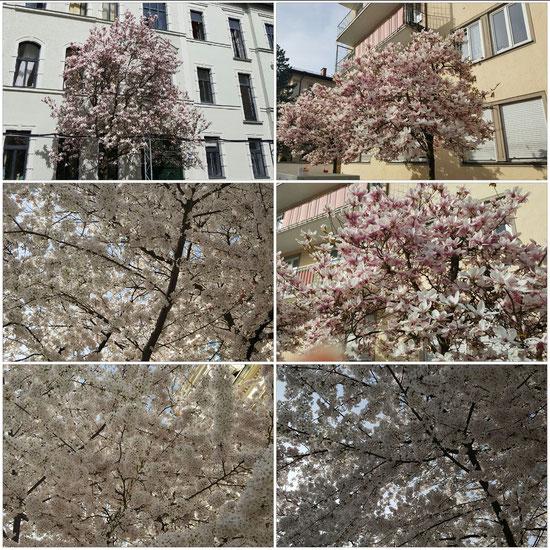 Da war übrigens schon Sommer. Ich stand bei 28°C unter Blütenbäumen!