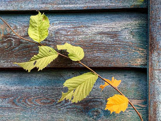 Herbstahnung