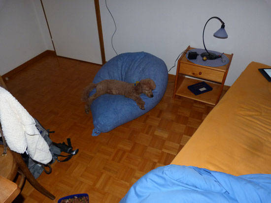 ein eigenes Bett für Klara