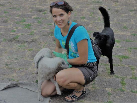 Strassenhunde in Thailand