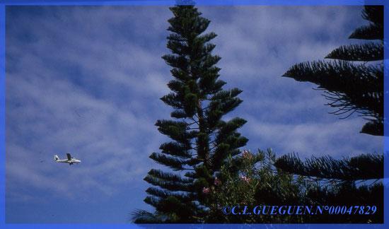Très beaux Pins Colonaires et le Twinotter qui repart sur Nouméa après avoir déposé les Militaires à Ouvéa...
