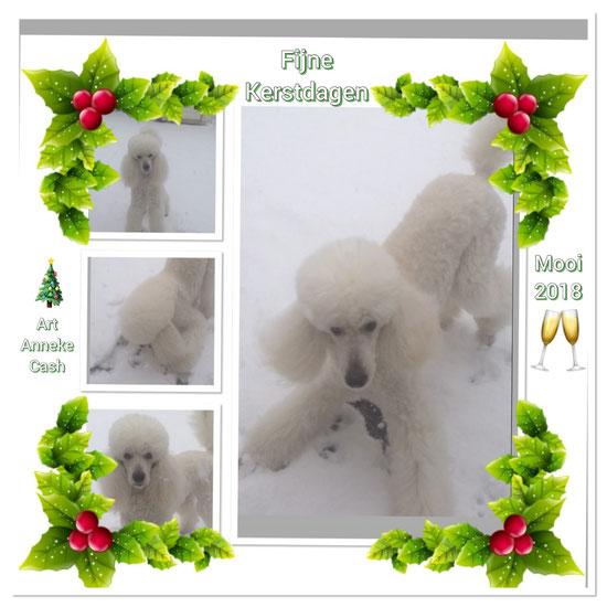 16 December 2017, weer tijd voor kerst en nieuwjaarskaarten! Dus iedereen van Cash en zijn familie Prettige Kerstdagen en een gezond 2018 toegewenst. /Fröhe Weihnachten und ein Schön 2018 alle!