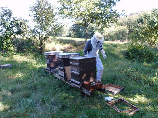 Bienengarten in Weilrod-Mauloff