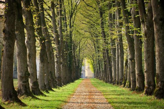 Bäume, frische Luft