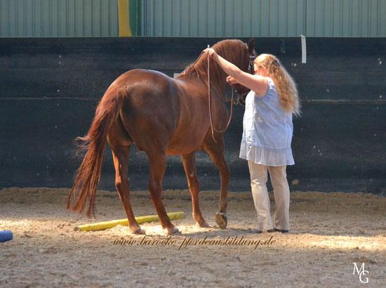 Lektionen wie die Schulparade erfordern höchste Konzentration bei Pferd und Mensch