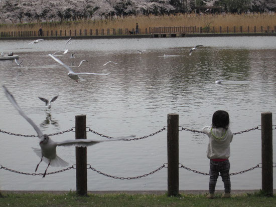 海ネコ?鳥たちの楽園です♪写真には写っていませんが沢山いるんです。