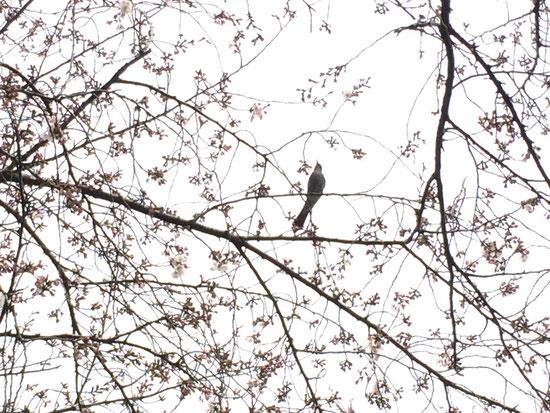 鳥達もお花見をしているようでした♪元気に飛び回っています。