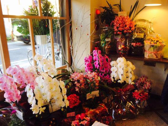 沢山のお祝の花がたくさん来てました♪